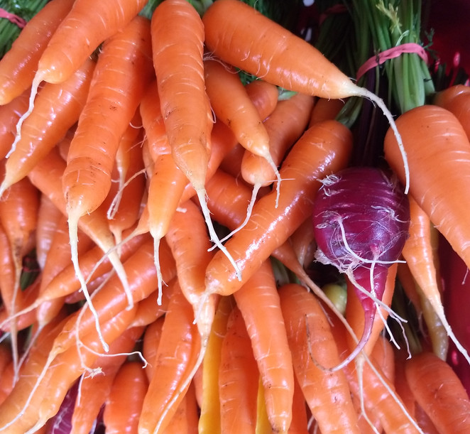Carrot Bunches for Market