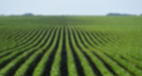 dicamba-impact-straight-from-farmers-be5