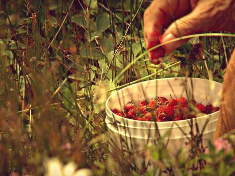 Petits fruits.jpg
