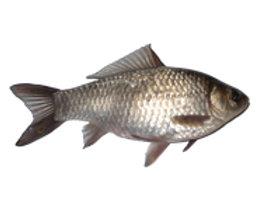 Комбикорм для товарной рыбы  (прудовый карп)