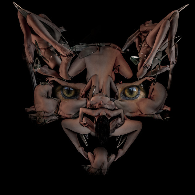 12 FOX.jpg