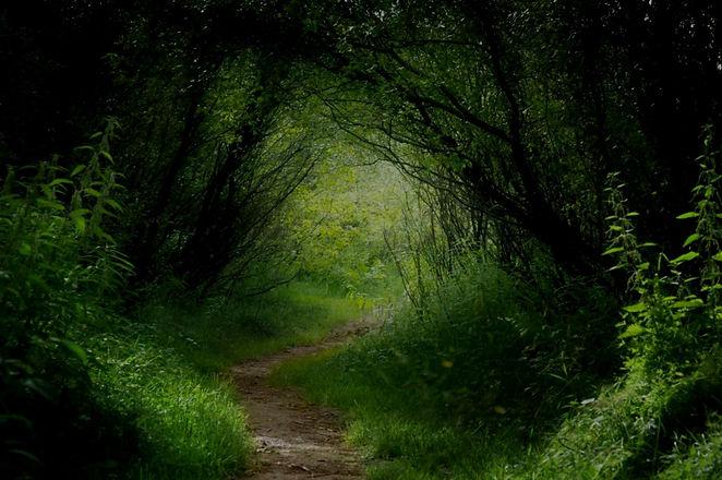 Forest-Zoe%2520Fuller_edited_edited.jpg