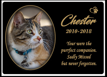 small cat plaque.png