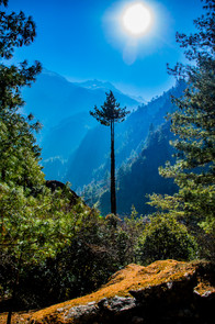 The Focal Tree, Nepal - March 2019