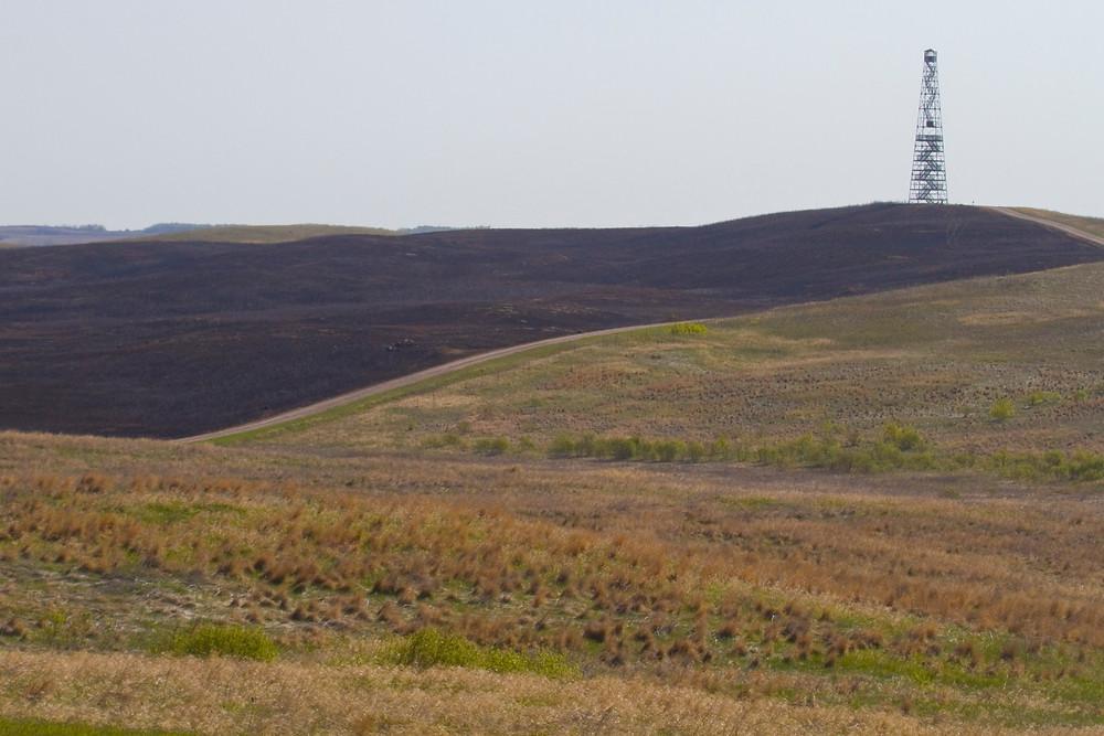 burned prairie for blog.JPG
