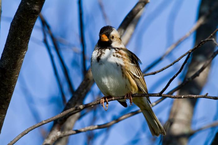 Fargo birding May 15 & 16