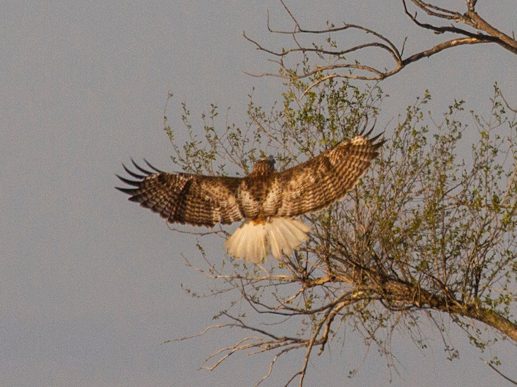 Kriders Hawk_blog.jpg