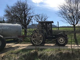 Neue Bio-Milch und zwar von nebenan