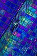 American made Lightstreams Glass Tile pool tile, waterline tile, and spa tile in Renaissance Collection Royal Blue iridescent glass pool tile