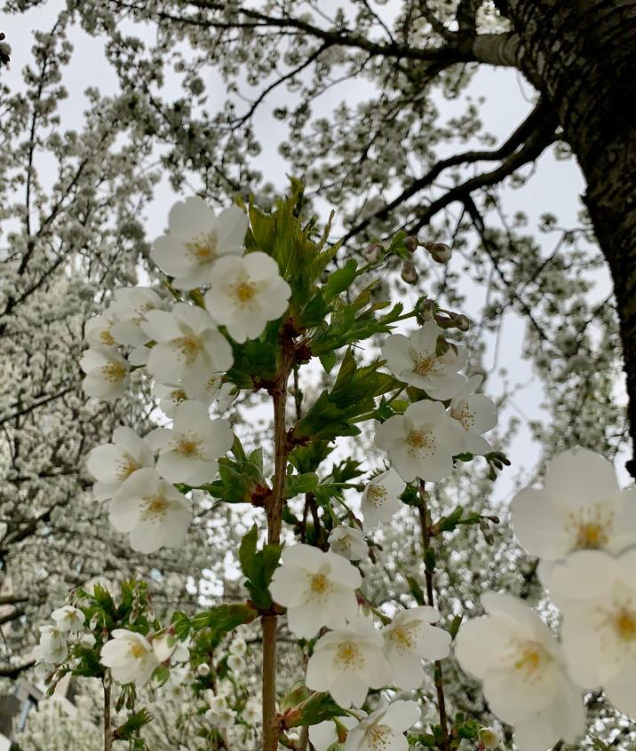 spring is also here.. feels strange