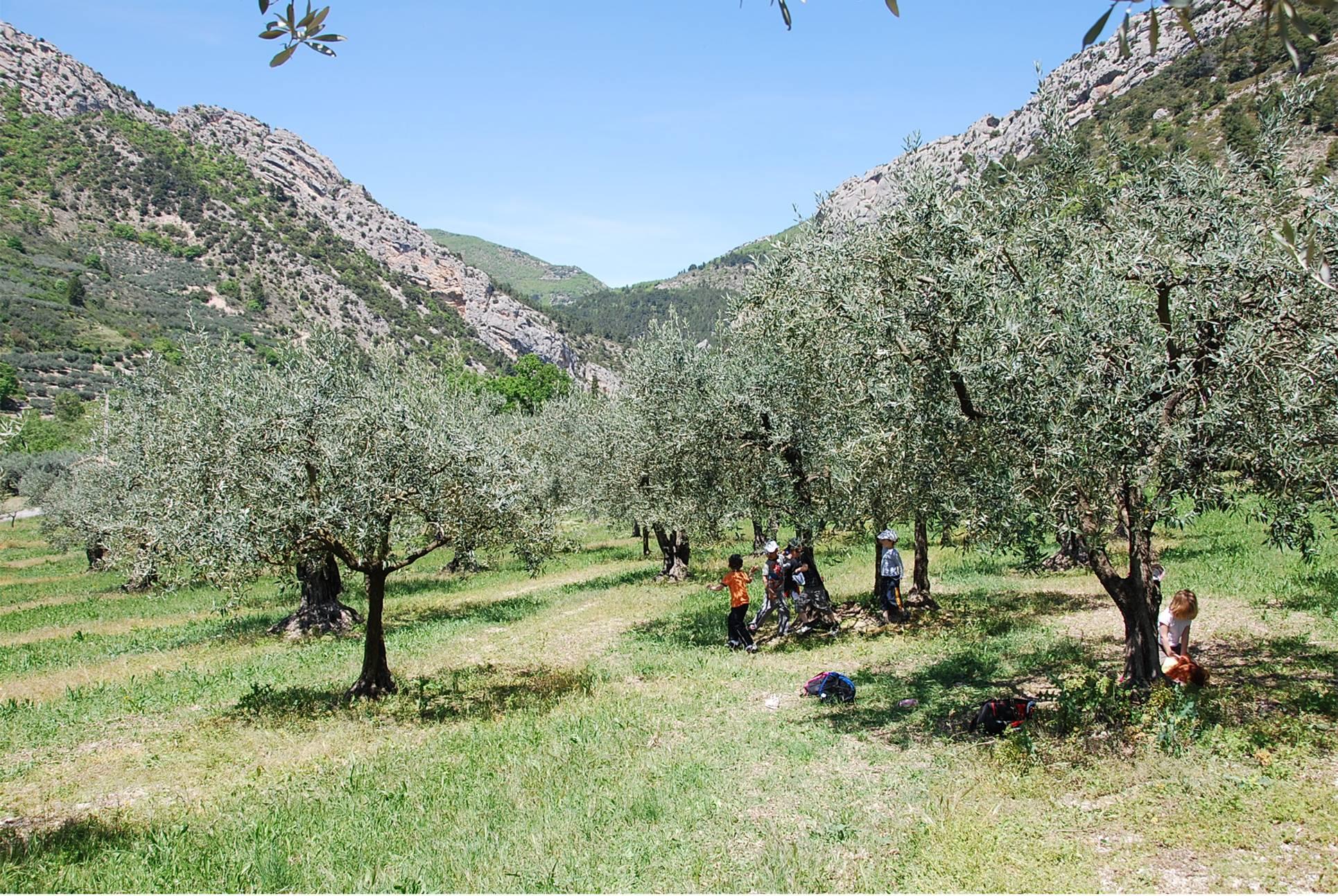 enfants buis dans les oliviers
