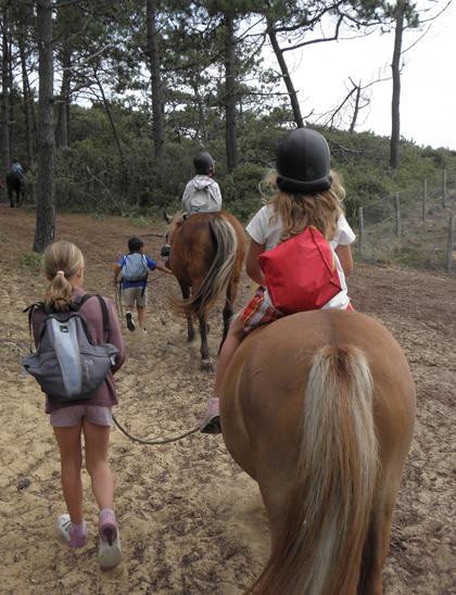 poneys2