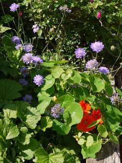 Jenny's Back Garden