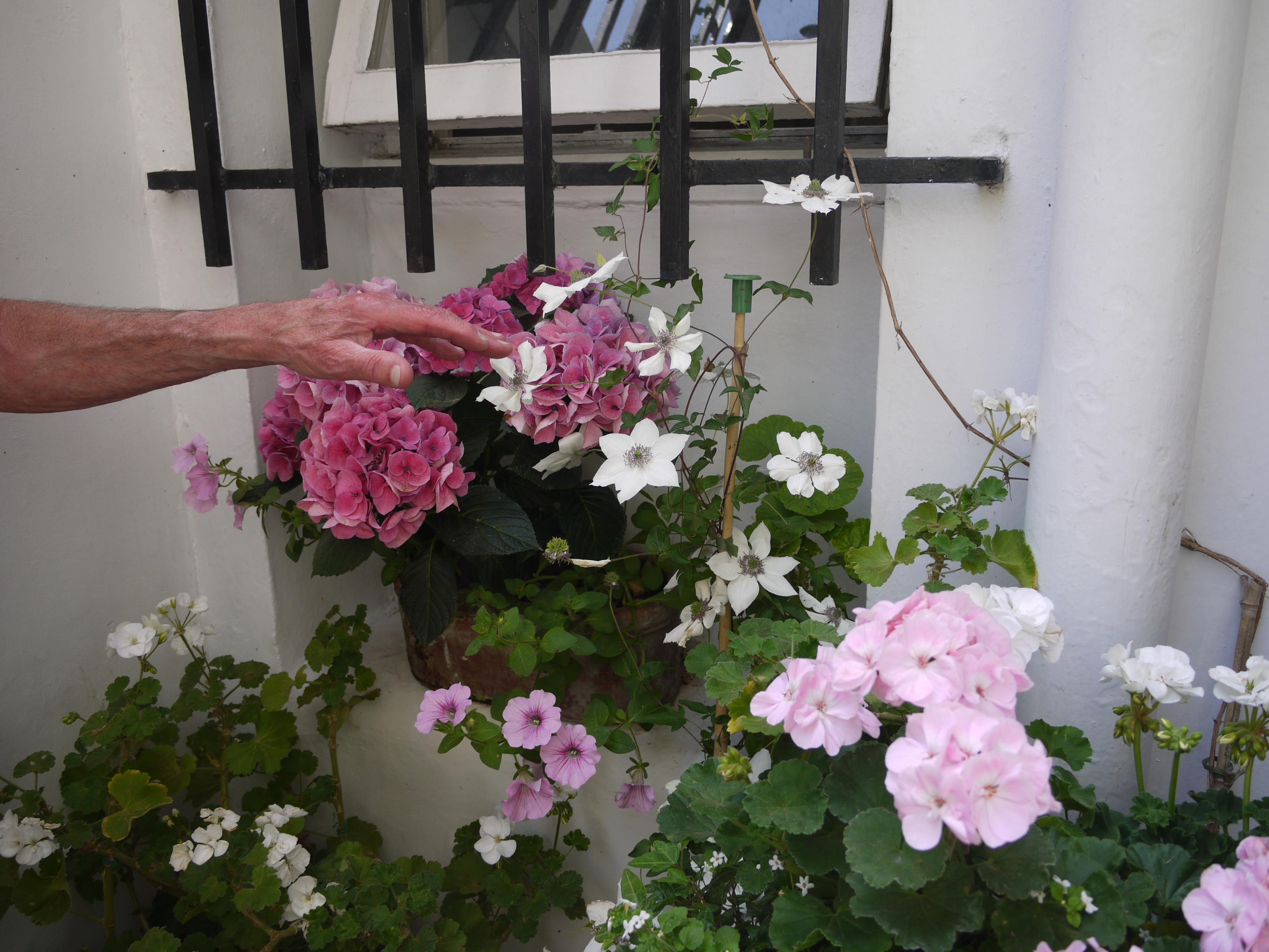 Norma's Front Garden