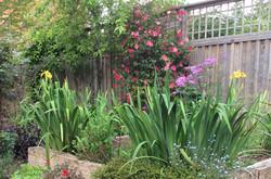 Jenny's garden