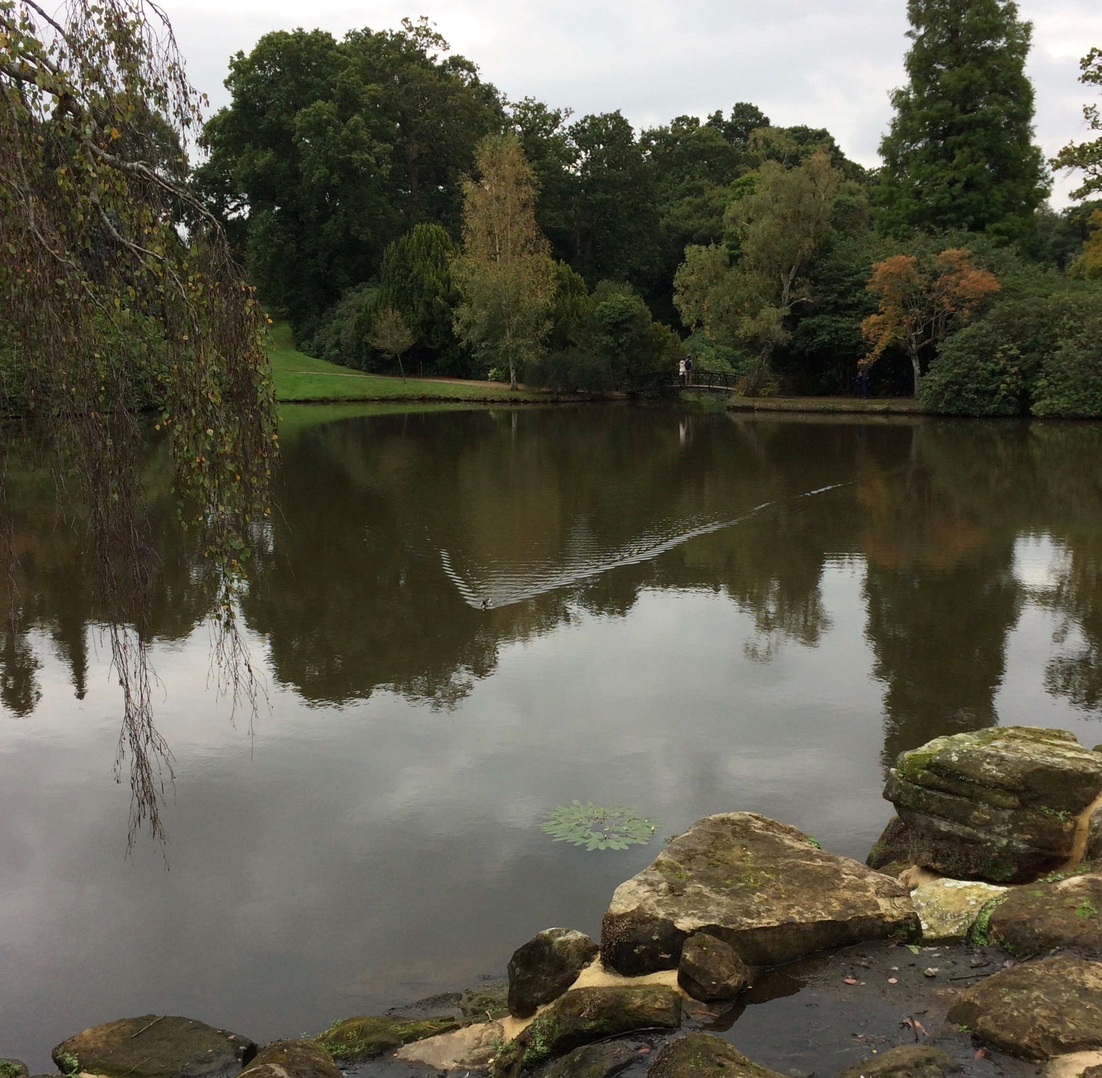 Sheffield Park 2019