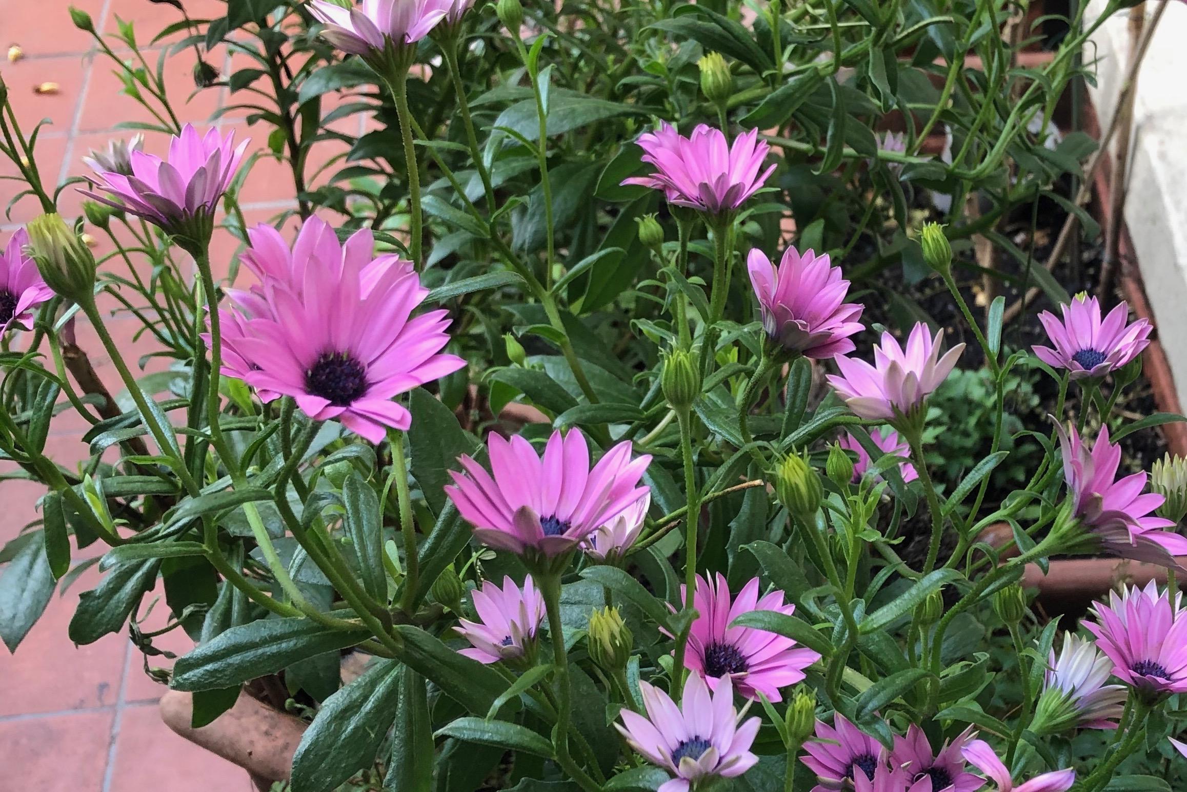 Peter's garden