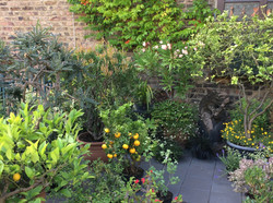 Tako's rooftop garden
