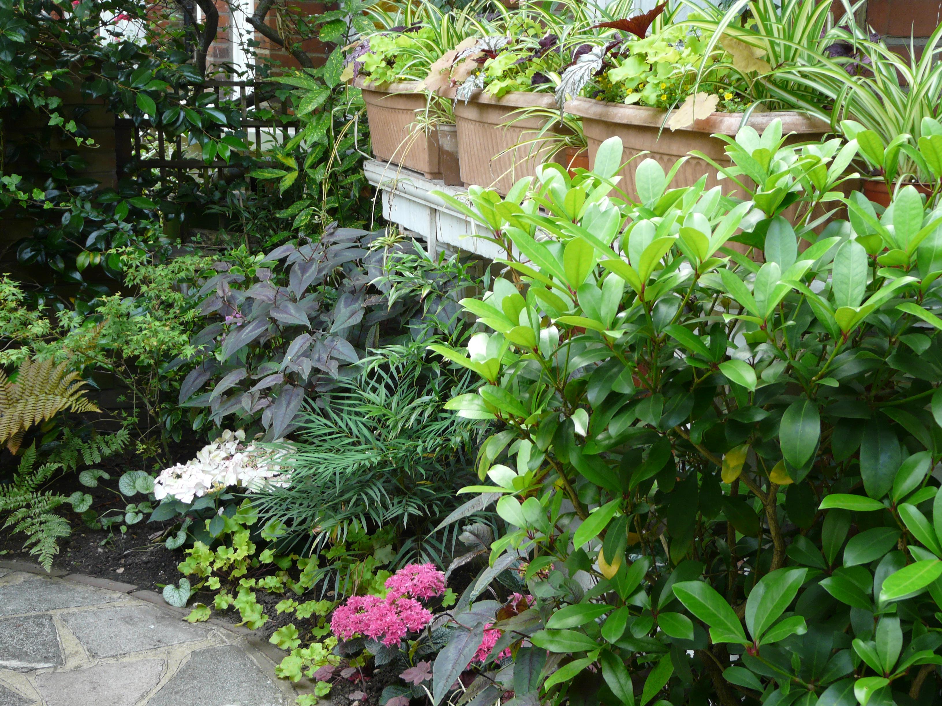 Harvey's Front Garden
