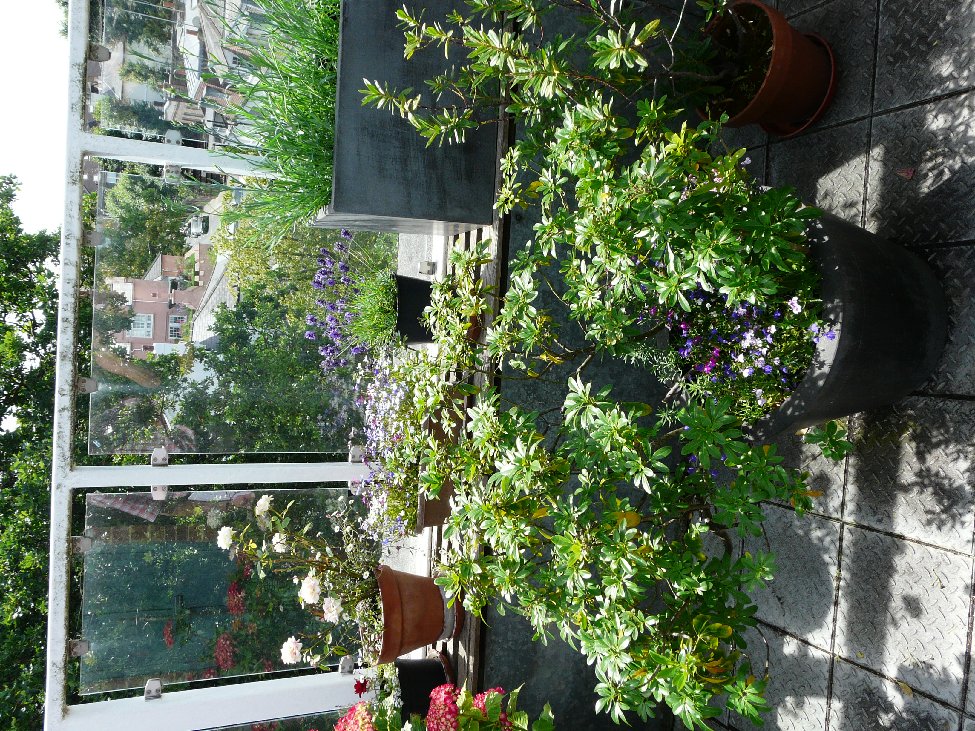 Susan's Roof Garden