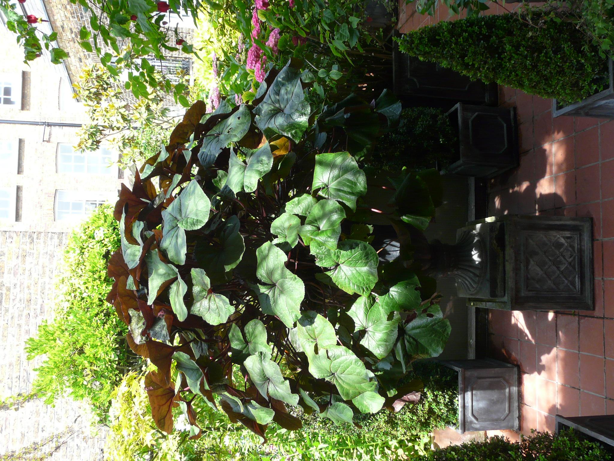 Peter's Roof Garden