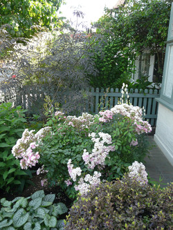 Jenny's front garden