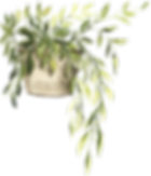 potted_0009_10.png