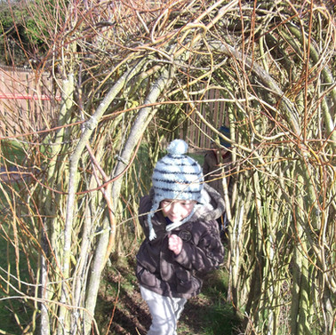 Willow Arch in Spring