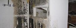Mold-Small.jpg