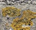 Spores.jpg