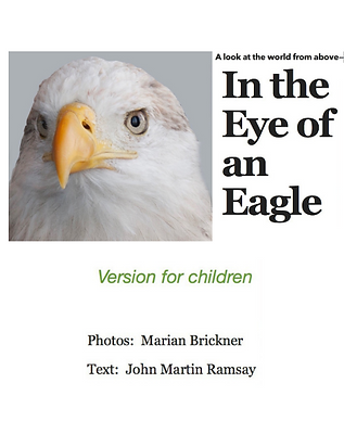 Eye of Eagle.png