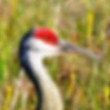 Crane Refuge - Sample Crane.jpeg
