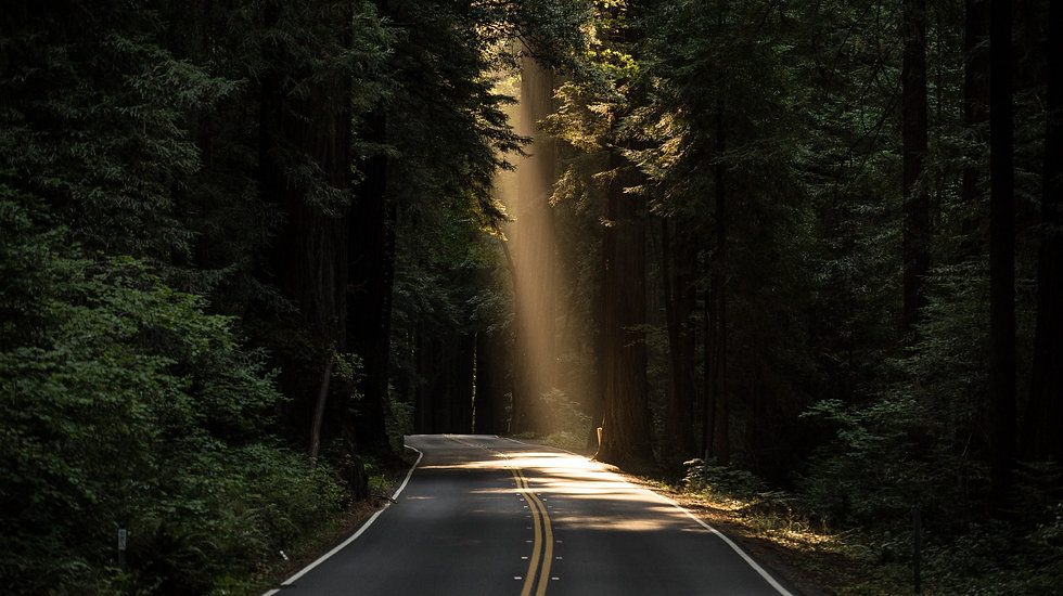 Road through tree covered mountains with a theraputic ray of sunlight