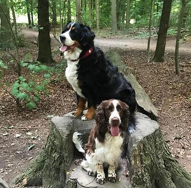 Mobile Hundeschule Schleswig-Holstein