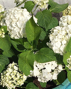 Blumen Simone Brandenburg