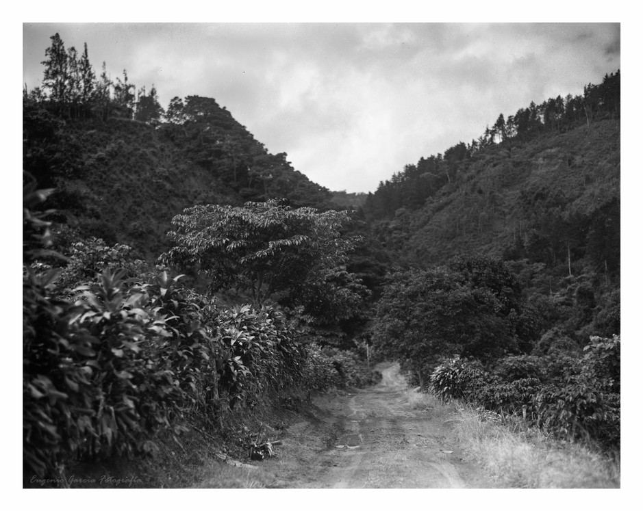 Un camino que me gustó. Navarro, 2015