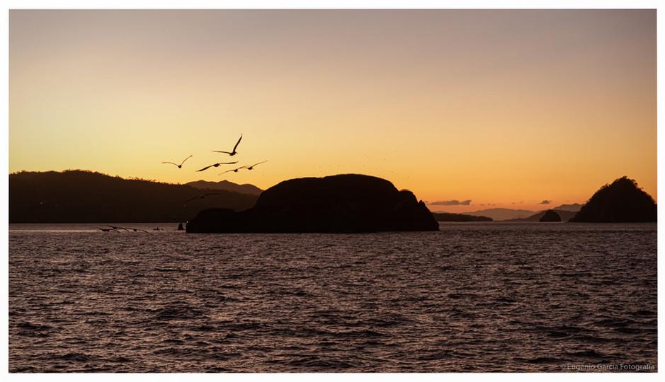 Retorno a Isla de Pájaros. Golfo de Nicoya, 2021