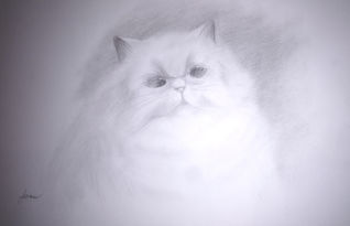 janice cat copy.jpg
