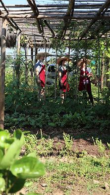 Bees Garden tour