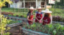 bees garden organic garden tour