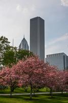 Chicago 038.jpg