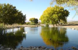 Duck Pond at Las Maravillas