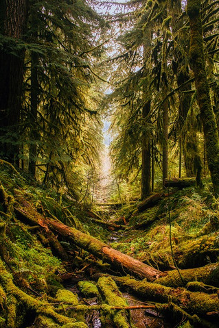 If a Tree Falls in a Forest: A Quick Lesson on Blogging and Social Media