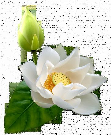 lotus page titre.png