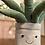 Thumbnail: Jellycat , Amuseable Aloe Vera Big