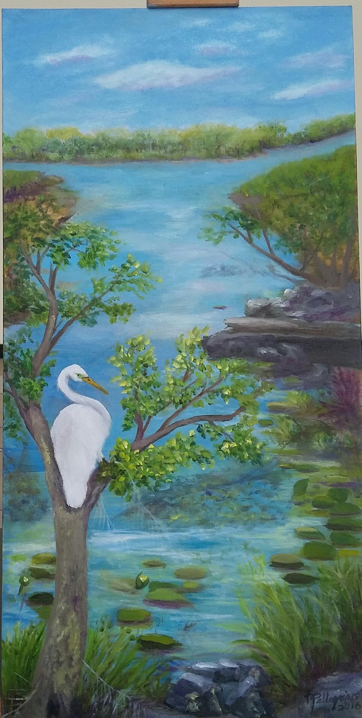 Looking Back, One Big Egret