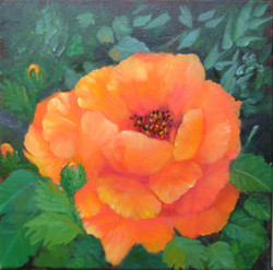 Orange You A Nice Poppy SOLD