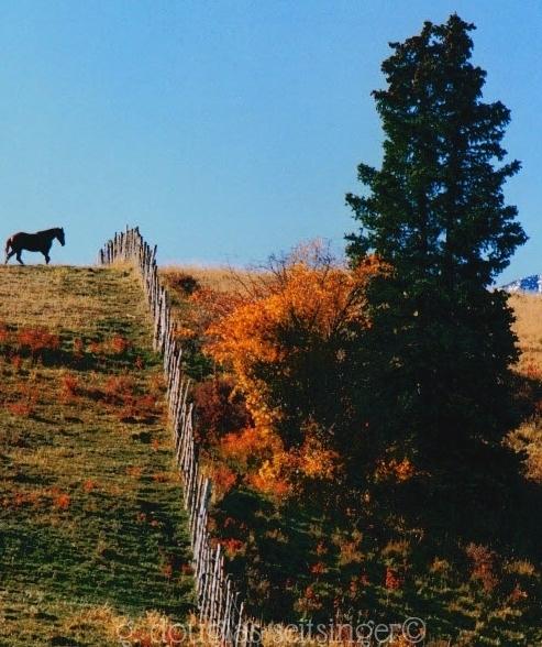 Rural 16