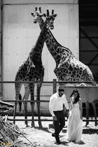 כנפי צילום - צילום אירועים וצילום חתונות