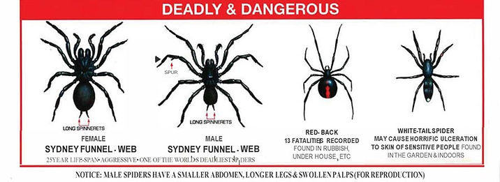 deadly spiders chart  copy.jpg
